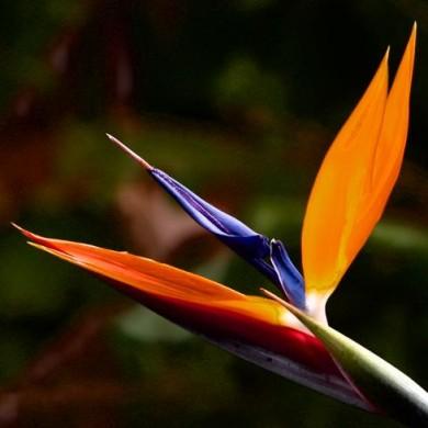 birdparadise_photo